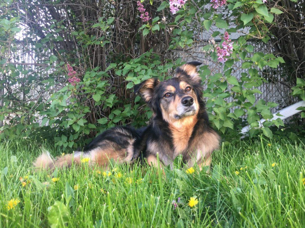 Westlock Vet Center - Stray Dogs