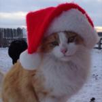 Santa is Coming!!!