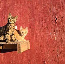 cats - Alysha MacDonald [alyshajmacdonald@gmail.com]