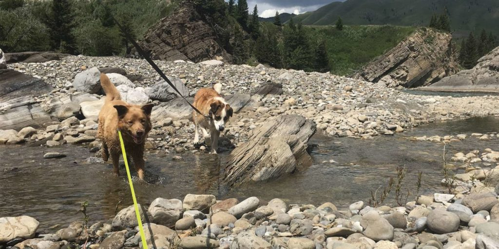 Ginger age 9 & Sabre 10 we adopted from SCARS in 2010 and 2012. Enjoying a weekend camping in the mountains