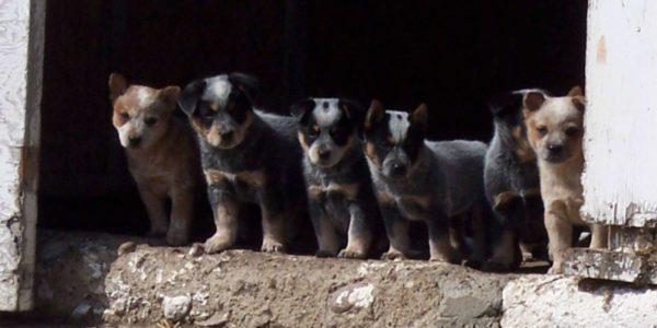 Puppies and Pet Vaccines Westlock Vet Center